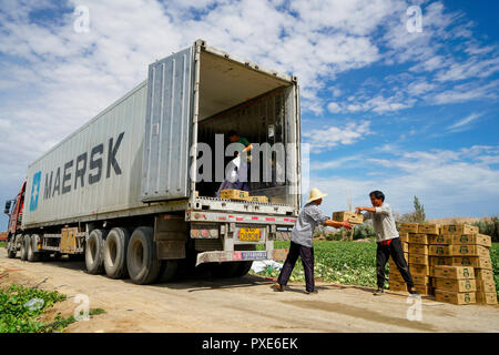 (181022) -- BEIJING, Oct. 22, 2018 (Xinhua) -- Farmers load cartons of freshly harvested Hami melons onto a container truck in Hami, northwest China's Xinjiang Uygur Autonomous Region, June 27, 2018. China's road freight transport continued fast expansion in the first nine months of 2018, the Ministry of Transport said in a statement Oct. 20, 2018. From January to September, the amount of cargo carried on roads, which takes up the lion's share in China's total cargo transport, increased 7.5 percent year on year to 28.64 billion tonnes. The growth came amid China's steady economic growth, which - Stock Photo