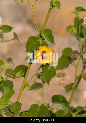 Closeup of a isolated flower with green leaves and blurred background - Stock Photo