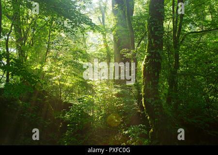 Komorebi (Sunlight Filters Through the Trees) - Stock Photo