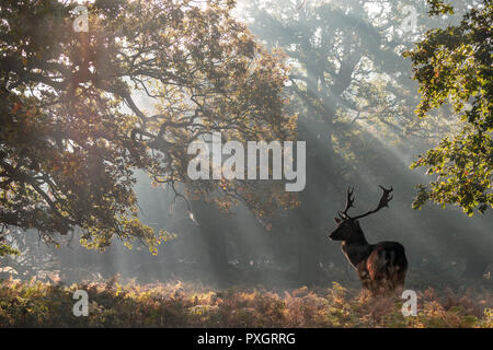 Stag Basking In The Early Morning Sunbeams - Stock Photo