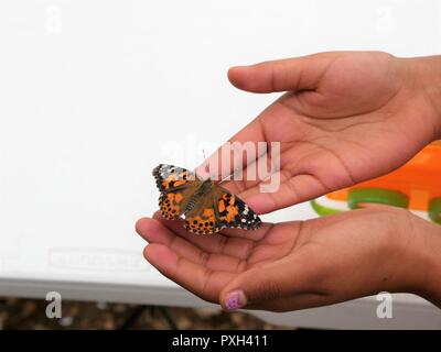A girl holding butterfly freely in hands outdoors - Stock Photo