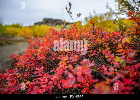 Autumn colours at the Dimmuborgir lava fields near Myvatn in the north of Iceland - Stock Photo