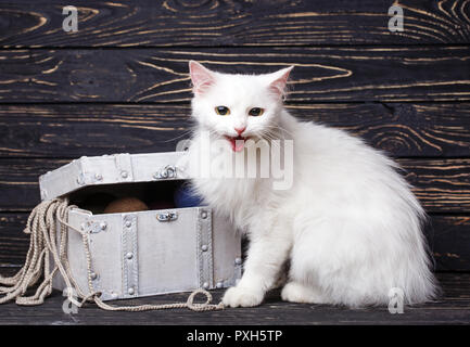 A white cat sits next to a white chest on a black background - Stock Photo