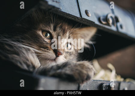 A playful kitten in the vintage box - Stock Photo