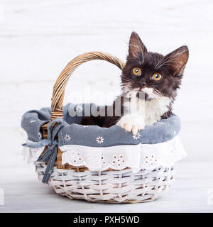 A playful, fluffy kitten in the basket. Isolated on a white background - Stock Photo