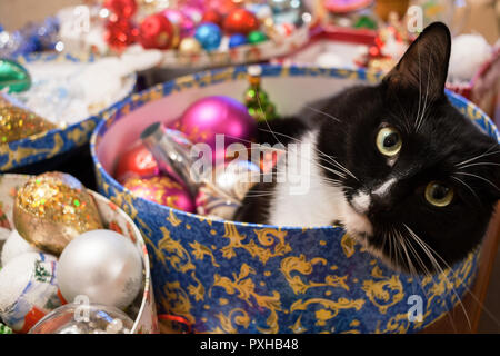 Black and white cat is lying in round box with Christmas decorations and looking at camera. - Stock Photo