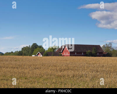 Red farm buildings across a field of grain, a typical sight in rural Norway, here in Asker  west of Oslo - Stock Photo