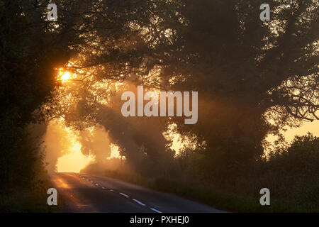 Sunrise light through a tunnel of trees in the early morning mist near stow on the wold. Stow on the wold, Cotswolds, Gloucestershire, England - Stock Photo