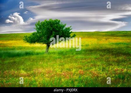Lone tree and wildflowers. Zumwalt Prairie, Oregon