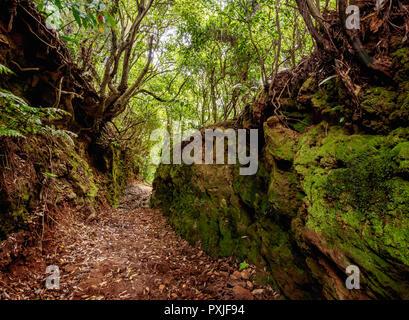 Forest on the slopes of Pico Alto, Santa Maria Island, Azores, Portugal - Stock Photo