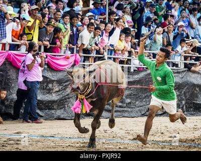 October 23, 2018 - Chonburi, Chonburi, Thailand - A jockey whips his water buffalo after dismounting in the buffalo races in Chonburi. Contestants race water buffalo about 100 meters down a muddy straight away. The buffalo races in Chonburi first took place in 1912 for Thai King Rama VI. Now the races have evolved into a festival that marks the end of Buddhist Lent and is held on the first full moon of the 11th lunar month (either October or November). Thousands of people come to Chonburi, about 90 minutes from Bangkok, for the races and carnival midway. (Credit Image: © Jack Kurtz/ZUMA Wire) - Stock Photo