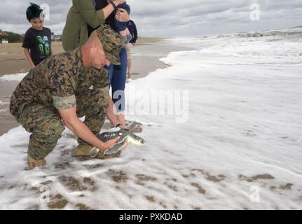 "VIRGINIA BEACH, Va. (June 8, 2017) Gunnery Sgt. Paul Worley releases ""Purple Heart,"" a Kemp's ridley sea turtle, back into the Atlantic Ocean after being rehabilitated from a fishing hook. Worley, attached Command Marine Corps Security Cooperation Group at Joint Expeditionary Base Little Creek-Fort Story, is a Purple Heart recipient. ""Purple Heart"" is equipped with a U.S. Navy-funded satellite tag used to track the turtle's movements and the release was conducted as part of a Navy research project with the Virginia Aquarium and Marine Science Center. - Stock Photo"