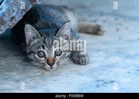 Small adorable kitten looking into the camera while lying on the concrete floor - Stock Photo