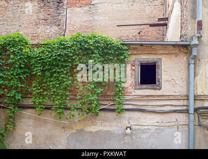 Wall of an abandoned building covered by green creeper - Stock Photo