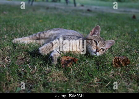 cute striped cat playing in the grass in the garden - Stock Photo
