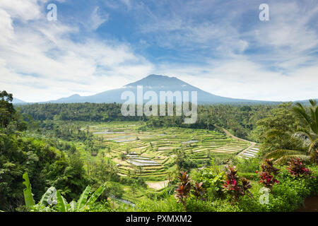View of rice terraces and Gunung Agung volcano, Rendang, Bali, Indonesia - Stock Photo