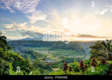 View of rice terraces and Gunung Agung volcano at sunrise, Rendang, Bali, Indonesia - Stock Photo