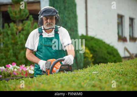 Senior male gardener cutting garden hedge with petrol hedge cutter. Professional garden worker wearing in green uniform and gloves, with safety mask and protective headphones working with clippers. - Stock Photo