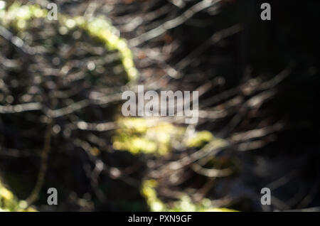 Leafless tree branches during autumn, with tle last red leaves, with moss covered stone in the background. - Stock Photo