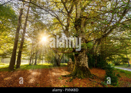 Sunrise in Pineta forest, Bielsa, Spain. - Stock Photo