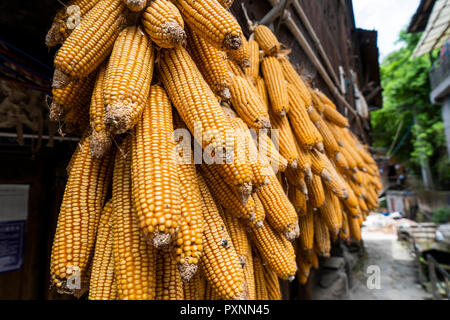 China, Guizhou, corncobs hanging out to dry in a Miao settlement - Stock Photo