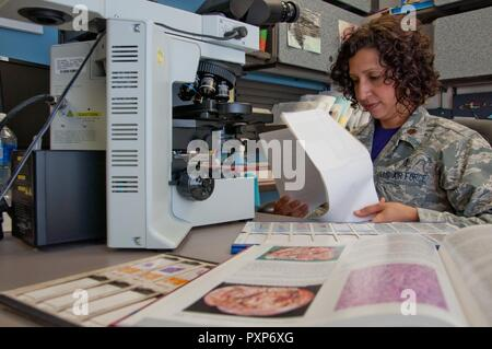 Maj. (Dr.) Luisa Watts, Wright-Patterson Medical Center staff pathologist, reviews a patient's file while making a molecular determination of what could be causing the patient's symptoms. Watts, along with three other staff pathologists at the WPMC, use information doctors provide, along with reviews of biological materials and reference materials, in forming their diagnoses. - Stock Photo
