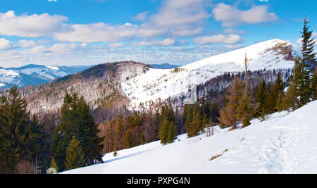 Parashka mountain top covered in snow in the Carpathian mountains. forest with high evergreen spruce trees. Sunny winter day; fluffy clouds in the blu - Stock Photo