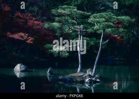 Beautiful tranquil autumn scenery of two pine trees in a pond Japanese Zen garden of Kinkaku-ji, Temple of the Golden Pavilion, Rokuon-ji temple, Kyot - Stock Photo
