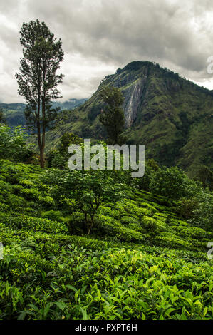 Little Adam's Peak, Ella, Sri Lanka - Stock Photo