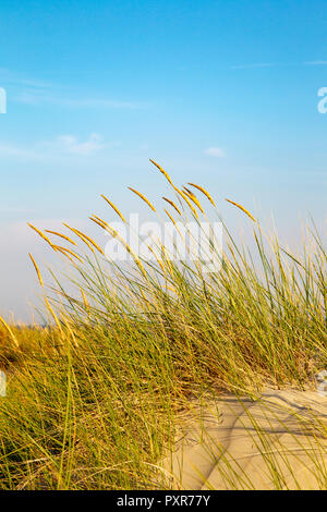 Beach grass growing in the dunes on the East Frisian Island Juist in the North Sea, Germany. - Stock Photo