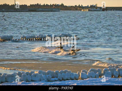 18 March 2018, Kaliningrad region Russia, Amber mining in the Baltic sea, men with nets in the water - Stock Photo
