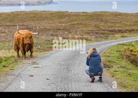 UK, Scotland, Inner Hebrides, Isle of Skye, tourist taking picture of Highland Cattle - Stock Photo