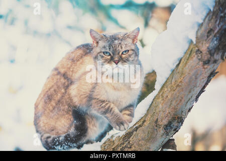 Siamese cat sits on a tree in the garden in a snowy winter - Stock Photo