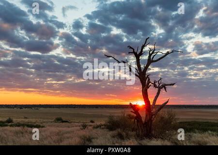 Africa, Botswana, Kgalagadi Transfrontier Park, Mabuasehube Game Reserve, Mabuasehube Pan at sunset - Stock Photo