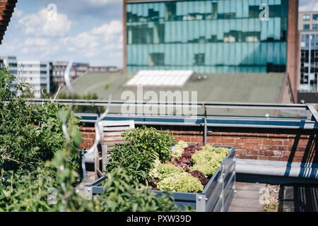 Germany, Duisburg, Urban rooftop garden Stock Photo