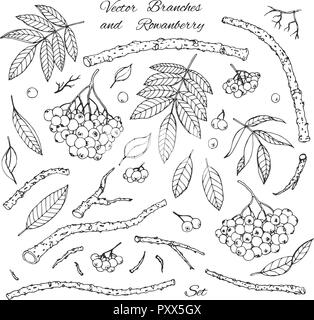 Hand drawn vector set of branches, leaves and rowanberry outline isolated on white background. Winter decoration in sketch style. - Stock Photo
