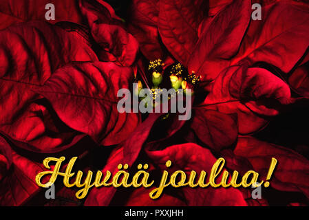 Merry Christmas Text In Finnish Hyvaa Joulua Turns To Dust From
