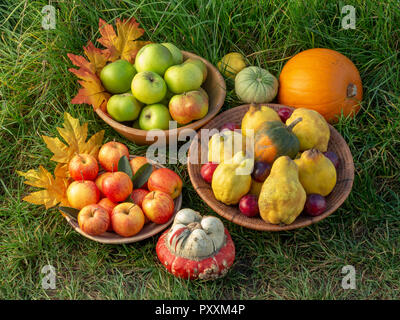 A selection of autumn fruits in bowls on a green grass background with leaf decorations - Stock Photo