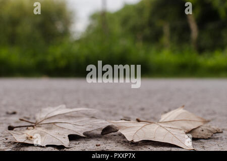 Autumn leaf on the ground of a street, in the background on the sidewalk of a rural road. - Stock Photo