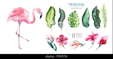Hand drawn watercolor tropical birds set of flamingo. Exotic rose bird illustrations, jungle tree, brazil trendy. Perfect for fabric design. Aloha col - Stock Photo