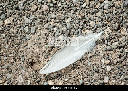 A white feather on a bed of gravel. - Stock Photo