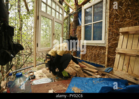 Kerpen, Germany. 24th Oct, 2018. In the Hambach forest, a masked activist is building a new tree house at a height of about eight meters. He hits nails in a wooden board with a hammer. This is where the tree village of Endor is built. Credit: David Young/dpa/Alamy Live News - Stock Photo