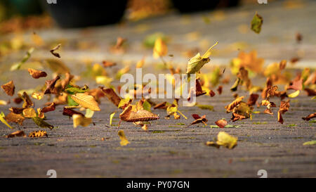 Autumn leaves blowing in the wind, UK Stock Photo