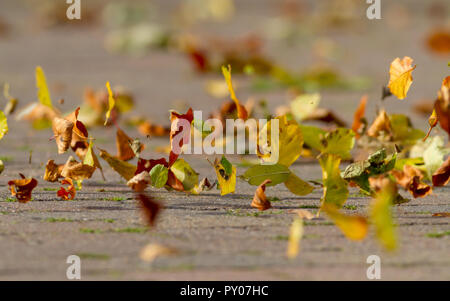 Autumn leaves blowing in the wind, UK - Stock Photo