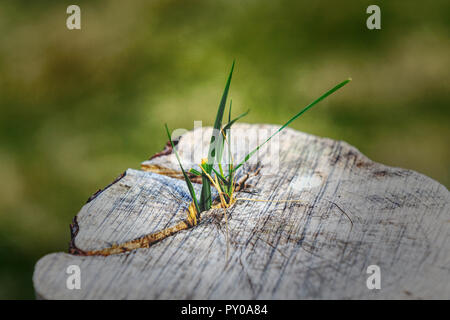 Nature fights back - Stock Photo
