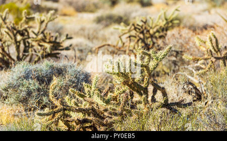 Cactus in Death Valley, California, USA. Close-up - Stock Photo