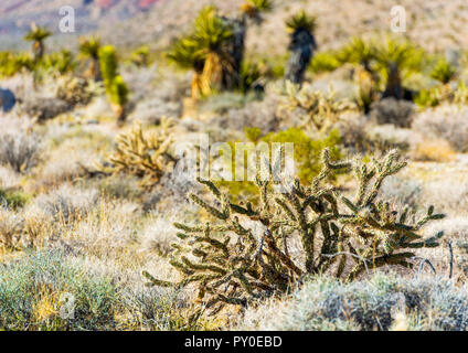 Cactus in Death Valley, California, USA. With selective focus - Stock Photo