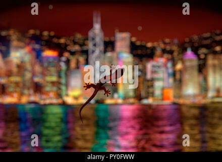 Lizard on hotel room window with blurred modern cityscape backdrop at night, Hong Kong, China - Stock Photo