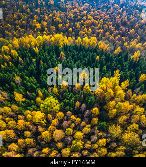 Aerial drone view of the colorful forest in Autumn - Stock Photo