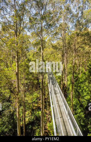 Great Otway National Park. Otway fly tree top walk. Walk among the tops of trees in the Australian forest, near the town of Apollo Bay (which is locat - Stock Photo